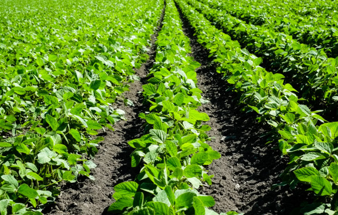 farming.software_soybean-field